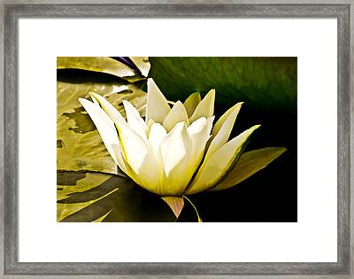 White Water Lily Framed Print by Design Windmill