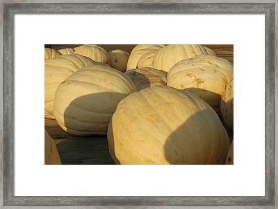 White Yellow Pumpkins Framed Print by LeeAnn McLaneGoetz McLaneGoetzStudioLLCcom