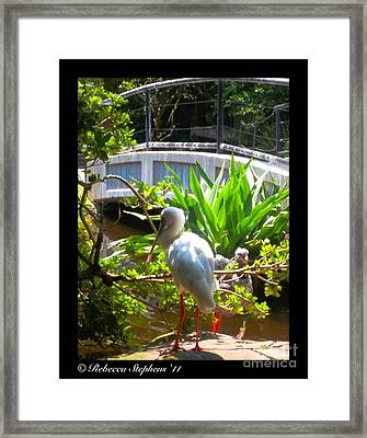 White Zen Framed Print by Rebecca Stephens