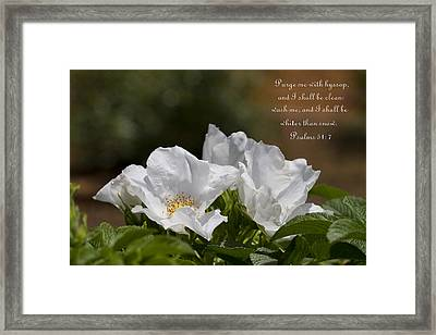 Whiter Than Snow Framed Print by Kathy Clark