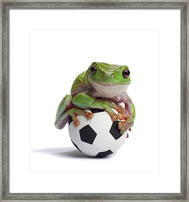 Whites Tree Frog On Small Football Framed Print by American Images Inc