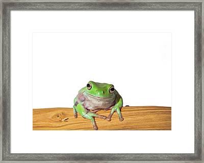 Whites Tree Frog Framed Print by Www.tommaddick.co.uk