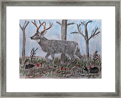 Whitetail Deer In A Meadow Framed Print