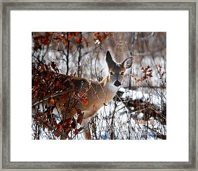 Whitetail Deer In Snow Framed Print