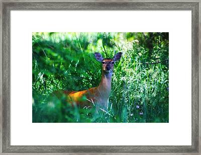 Whitetail Doe 2 Framed Print