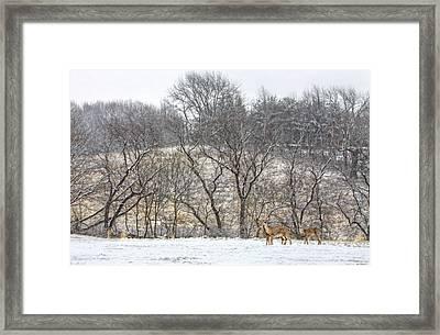 Whitetail Winter Framed Print