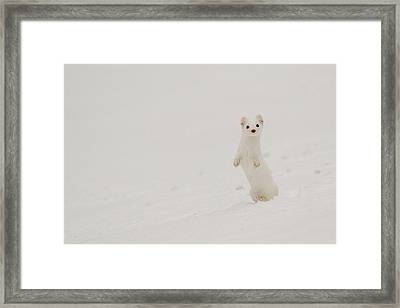 Whitewash Framed Print