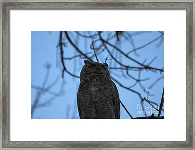 Who 2 Framed Print by Scotts Scapes