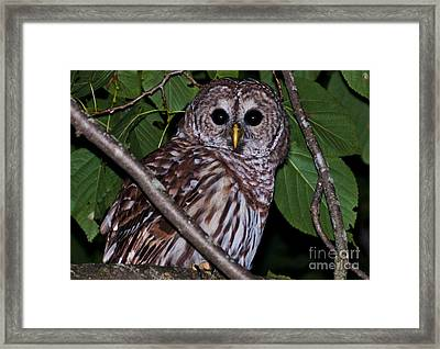 Who Are You 2 Framed Print by Cheryl Baxter