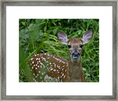 Who Are You Framed Print by Betsy Knapp