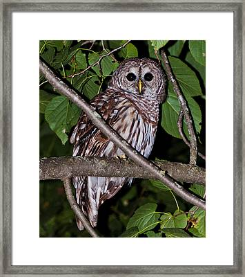 Who Are You Framed Print by Cheryl Baxter