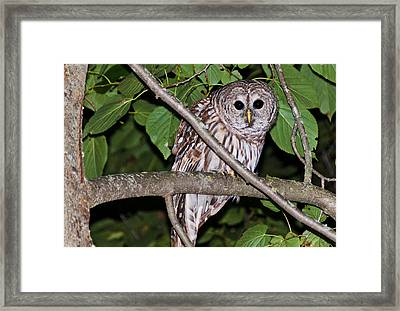 Who Are You Looking At Framed Print by Cheryl Baxter