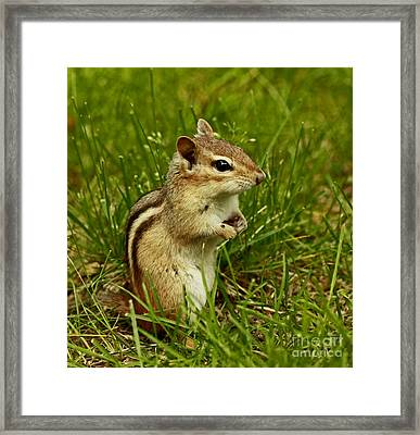 Who Goes There- Chipmunk Watch Framed Print