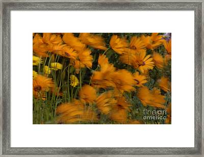 Who Has Seen The Wind Framed Print by Bob Christopher