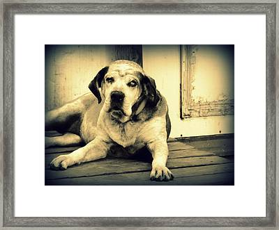 Who Me Framed Print by Heather Owen