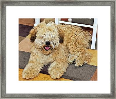 Who Needs A Haircut Framed Print by Edward Peterson