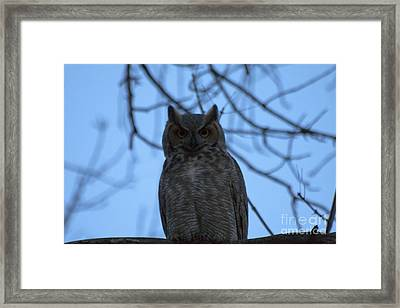 Who Framed Print by Scotts Scapes