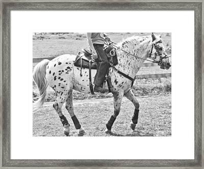Whoa Framed Print by Betsy Knapp