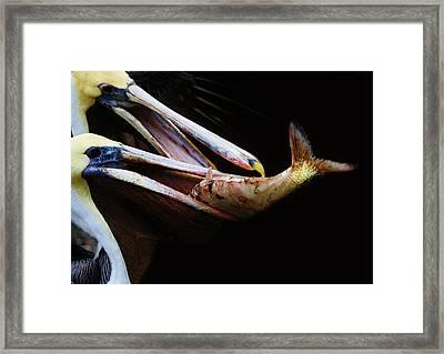 Whopper Framed Print by Paulette Thomas
