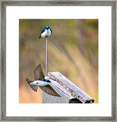 Framed Print featuring the photograph Who's The Boss by Joe Urbz