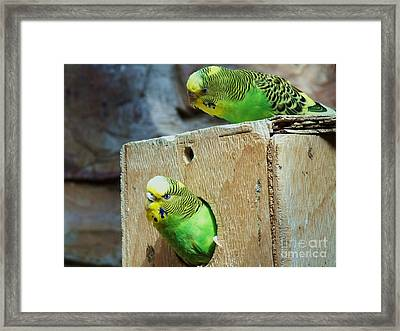 Who's There? Framed Print by Donna Parlow