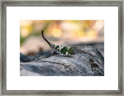 Framed Print featuring the photograph Why Be Normal? by Nola Lee Kelsey