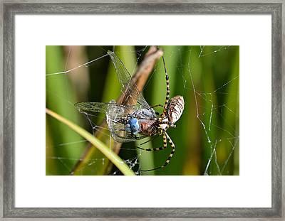 Wicked Web Framed Print by Fraida Gutovich