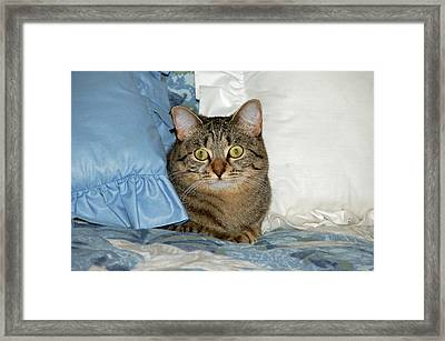 Wide Eyed Framed Print