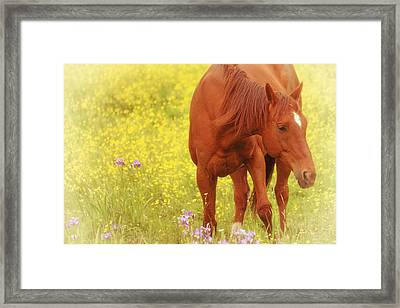 Wild As The Flowers Framed Print by Karol Livote