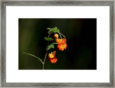 Framed Print featuring the photograph Wild Beauty by Ramabhadran Thirupattur