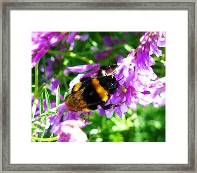 Wild Bee On Flower Framed Print by Andonis Katanos
