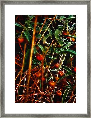 Wild Berries Framed Print by Ellen Heaverlo