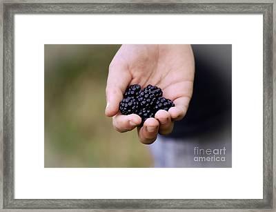Wild Blackberries Framed Print by Gwen McFadden