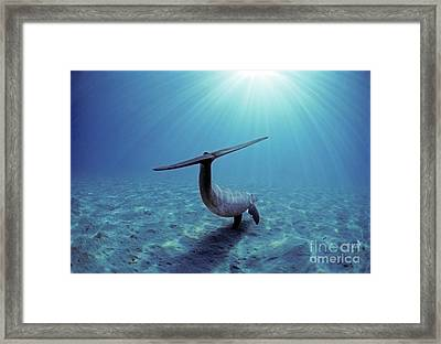 Wild Bottlenose Dolphin Framed Print by Jeff Rotman and Photo Researchers