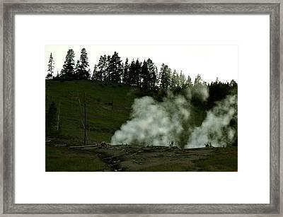 Wild Buffalo Framed Print