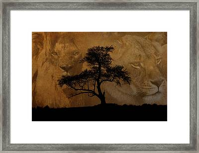 Wild Framed Print by Cindy Haggerty