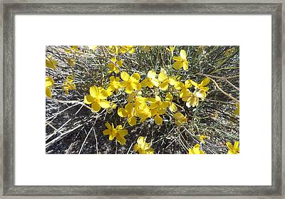 Framed Print featuring the photograph Wild Desert Flowers by Kume Bryant
