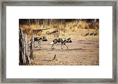 Wild Dogs Framed Print