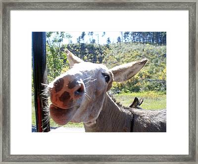 Wild Donkey Framed Print