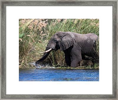 Wild Elephant Splashing In Water Framed Print by Karen Lee Ensley