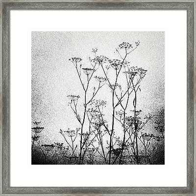 Wild Fennel #fennel Framed Print by Denise Taylor