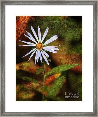 Wild Flower Framed Print by Billie-Jo Miller