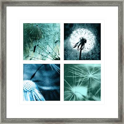 Wild Flower Dandelion Framed Print by Falko Follert