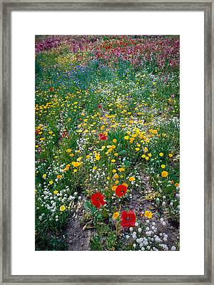 Wild Flowers 1 Framed Print by Mike Penney