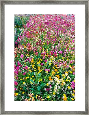 Wild Flowers 3 Framed Print by Mike Penney