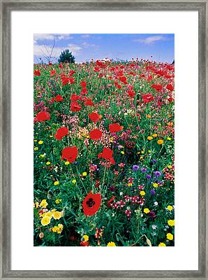 Wild Flowers 4 Framed Print by Mike Penney