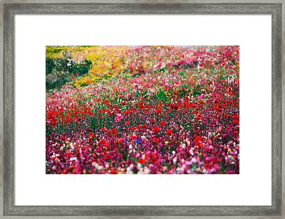 Wild Flowers 5 Framed Print by Mike Penney