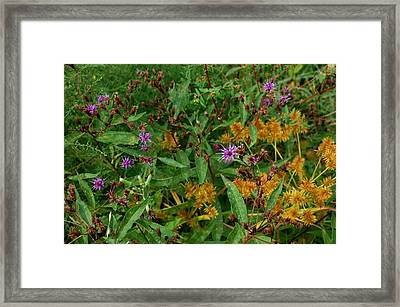Wild Flowers Framed Print by Beverly Hammond