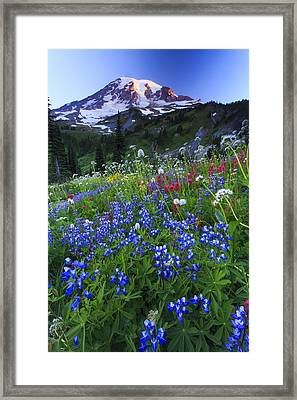 Wild Flowers In The Rainier National Park Framed Print