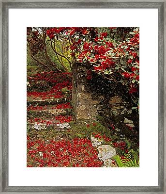 Wild Garden, Rowallane Garden, Co Down Framed Print by The Irish Image Collection